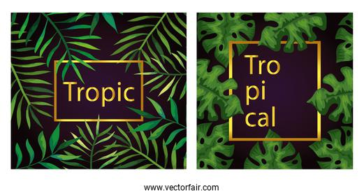 set of frames tropicals of branches with leafs