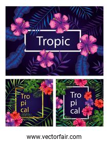 set of frames tropicals of flowers with branches and leafs
