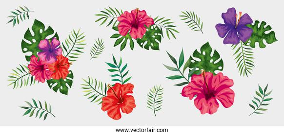 set of flowers with branches and leafs tropical