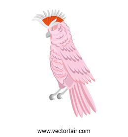 parrot pink animal exotic isolated icon