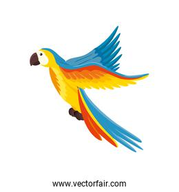 parrot animal exotic isolated icon