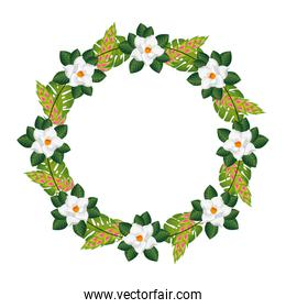 frame circular of flowers with leafs isolated icon
