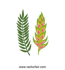 flower heliconia with branch and leafs isolated icon