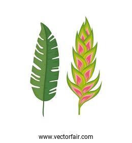 flower heliconia with leaf isolated icon