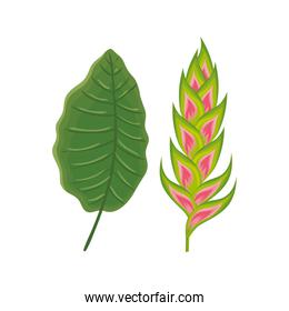 flower heliconia with leaf isolated