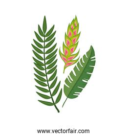 flower heliconia with leafs isolated icon