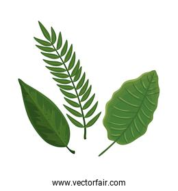 leafs nature tropical isolated icon