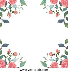 frame of roses with branches and leafs isolated icon