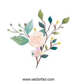 pretty rose with flower and leafs isolated icon