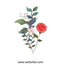 cute rose with flower and leafs isolated icon