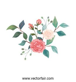cute roses with branches and leafs isolated icon