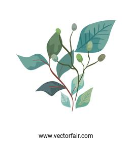 branches with leafs nature ecology isolated icon