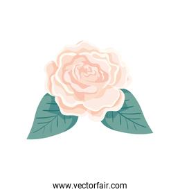 cute rose with leafs natural isolated icon