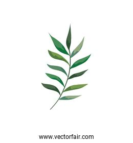 branch with leafs nature isolated icon