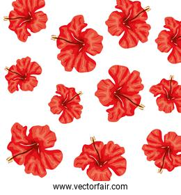 background of cute flowers of red color