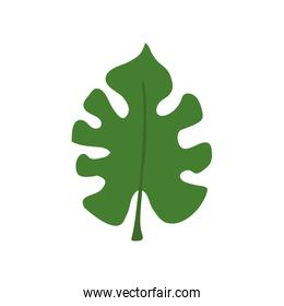 leaf nature tropical isolated icon