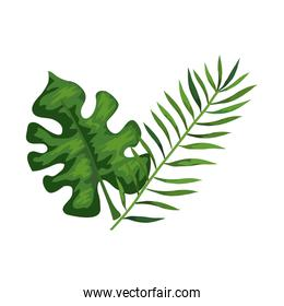 branch with leafs tropical nature isolated icon