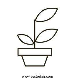 house plant in ceramic pot linear style