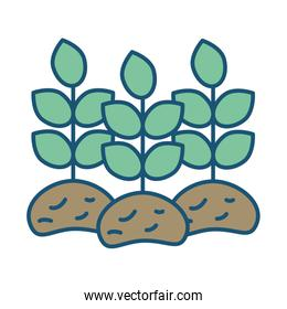 house plant cultivating isolated icon