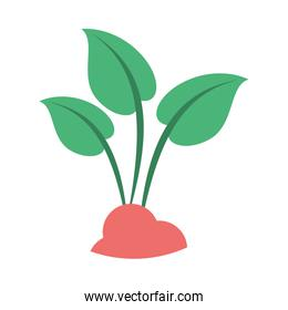 leafs plant ecology isolated icon