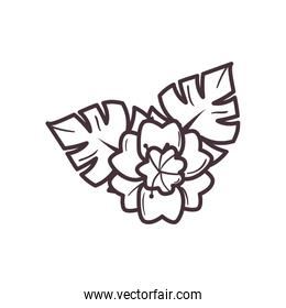 Isolated flower with leaves line style icon vector design