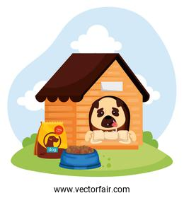 cute dog in wooden house and food