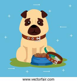 cute dog with dish food and collar