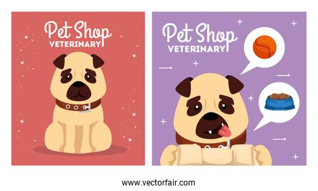 set poster of pet shop veterinary with icons