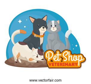 pet shop veterinary with cute cats and dog