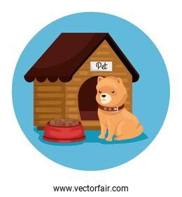 cute dog with wooden house and dish food
