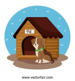 cute dog with wooden house