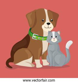 cute little dog with cat