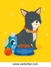 cute dog with icons for care and dish food