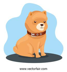 cute dog animal with collar icon