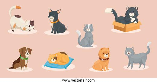 group of cute dogs with cats animals