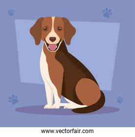 brown dog with white spot in background with pawprints