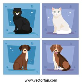 set poster of cute cats and dogs