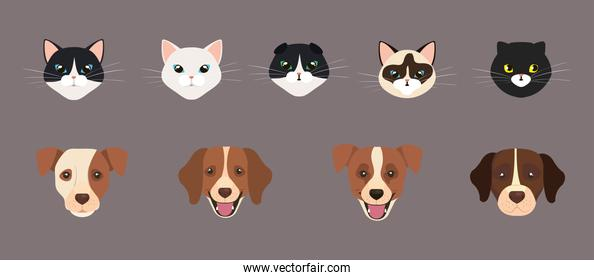 set of cute faces of cats and dogs