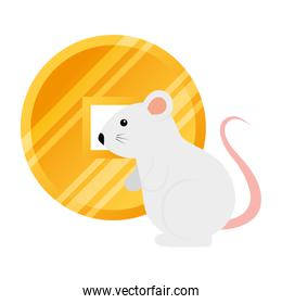 cute rodent rat with golden coin