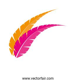 Isolated feathers plumes vector design