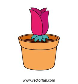 rose flower in pot plant isolated design
