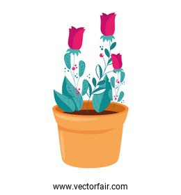 roses flowers in pot plant isolated icon