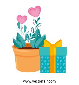 gift box with flowers in pot plant