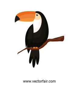 toucan animal exotic isolated icon