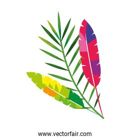 exotic feathers with tropical leafs isolated icon