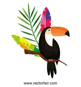 toucan with exotic feathers and tropical leaf