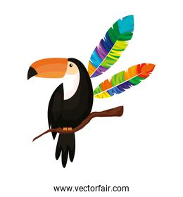 toucan animal with exotic feathers