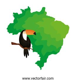 toucan animal exotic with map of brazil