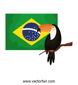 toucan animal exotic with flag brazil