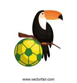 sport ball soccer with toucan isolated icon